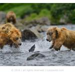 фотографии диких животных Николая Зиновьева