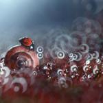 Волшебные макро фотографии Вадима Трунова