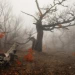 фото леса Андрея Уляшева