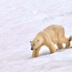 фото диких животных Сергей Кокинского