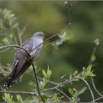фото птиц Александра Чувилина