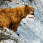 редкие фото животных Алексея Сулоева