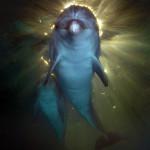 подводные фотографии Виктора Лягушкина