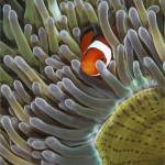 фото подводного мира Сергея Гаспаряна