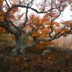 завораживающие фото леса Анатолия Гордиенко
