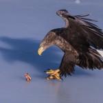 фото хищных птиц Евгения Слободского