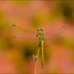 макро фото насекомых Андрея Бурлова