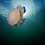 фото морских обитателей Андрея Шпатака