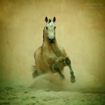 Прекрасная конная фотография Ольги Итиной