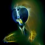 макро фотографии насекомых Михаила Грибкова