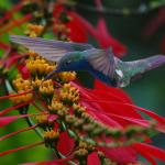 фото экзотических птиц Сергея Волкова