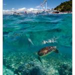 фотографии подводного мира Андрея Нарчука