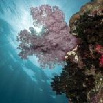 фото подводной флоры Алексея Пупышева