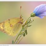 макро фотографии насекомых Дмитрия Монастырского
