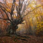 фото лесных пейзажей Ильи Мелихова