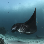 подводная фотография Геннадия Федоренко