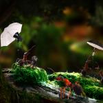 макро фото муравьев Ирины Козорог
