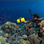 Подводный мир Марины Кочетовой