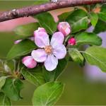 волшебные макро цветы Ольги Татаржицкой