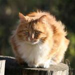 Портреты котов и кошек Григория Володькина
