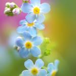 Прекрасная макро флористика Татьяны Макушиной