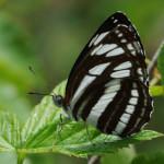 прекрасные и хрупкие бабочки Дмитрия Корпусова
