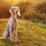 забавные портреты собак Алены Артамоновой