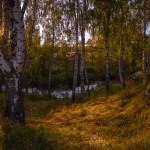Волшебный лесной пейзаж Юрия Морозова