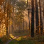 Краски лесного пейзажа Марата Ахметвалеева