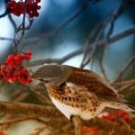из жизни птиц Сергея Кубрака