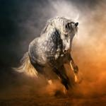 прекрасная конная фотография Аллы Берлезовой