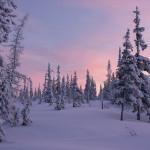 сибирские пейзажи Андрея Снегирёва