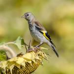птицы в дикой природе Алексея Овчинникова