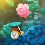 естественная красота бабочек Татьяны Крыловой